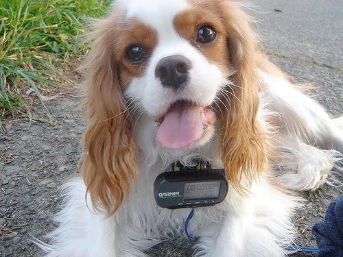 Gps Tracking Dog