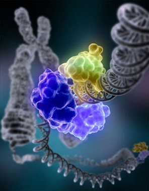 Il gene emozionale (memoria epigenetica)