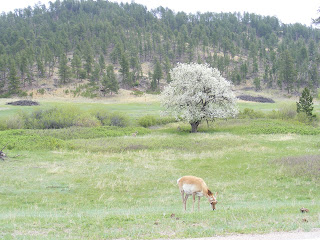 Antelope and Apple Tree
