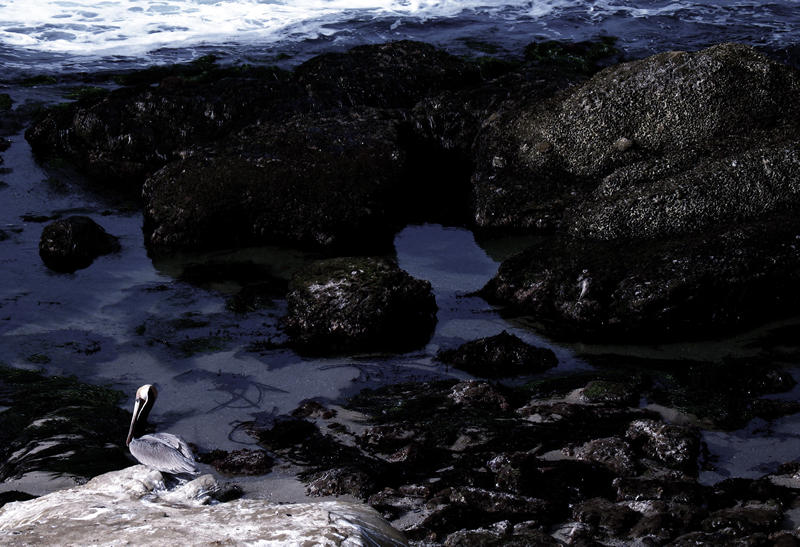 pelican; click for previous post