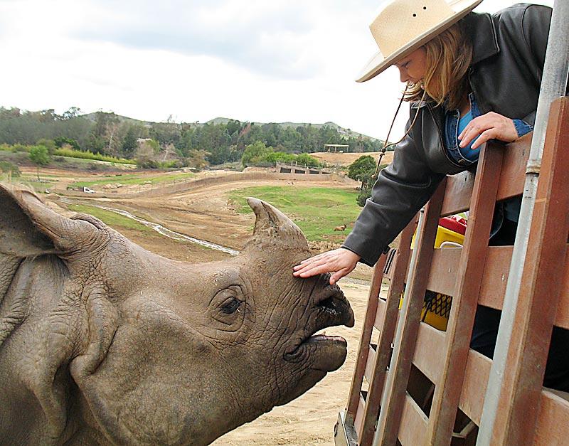 Dani pets a rhino; click for previous post
