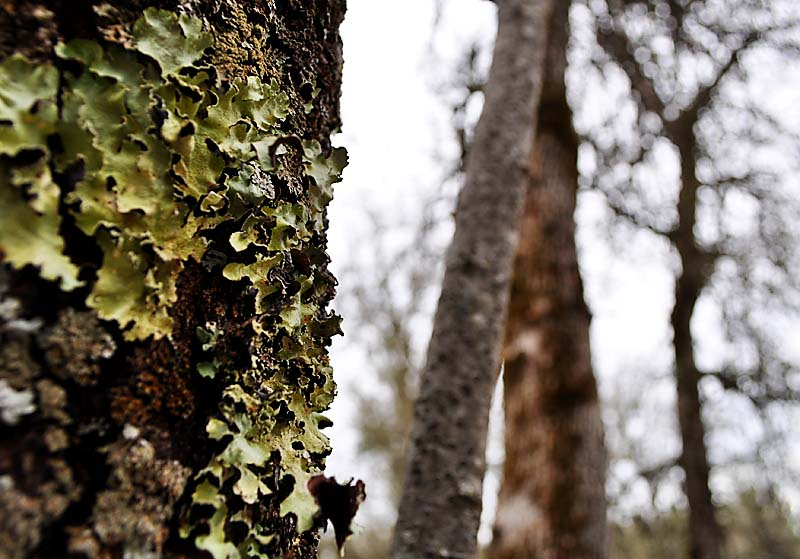 Lichens and trees; click for previous post