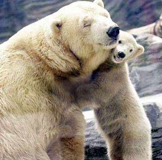 ... que ya van a desaparecer esos putos osos de la fas de la tierra