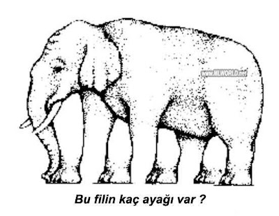 bu filin kaç ayaği var?? Z11
