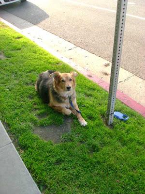 Female Dog Waiting For Her Master