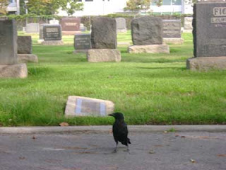 Woodlawn Cemetery Crow