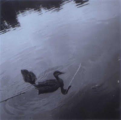 Mayflower Ducks - Summer 1970