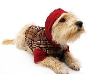Enero 2011 1000 ideas de negocios for Accesorios para mascotas