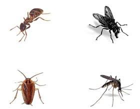 Salud natural uso de plantas aromaticas para el control - Plantas para ahuyentar insectos ...
