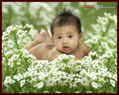 Big Eyes Cute Baby Cute Babies Desktop Wallpapers Cute Baby in Flowers