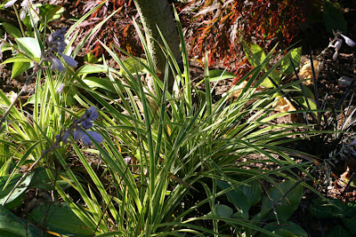 how to grow grass under pine trees
