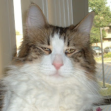 Minchie Meow