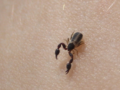 pseudoscorpion and beetle relationship test
