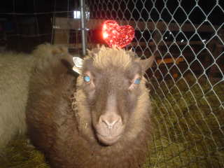 [sheep+318.JPE]