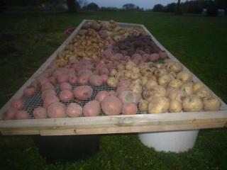 [peaches+potatoes+047.JPE]