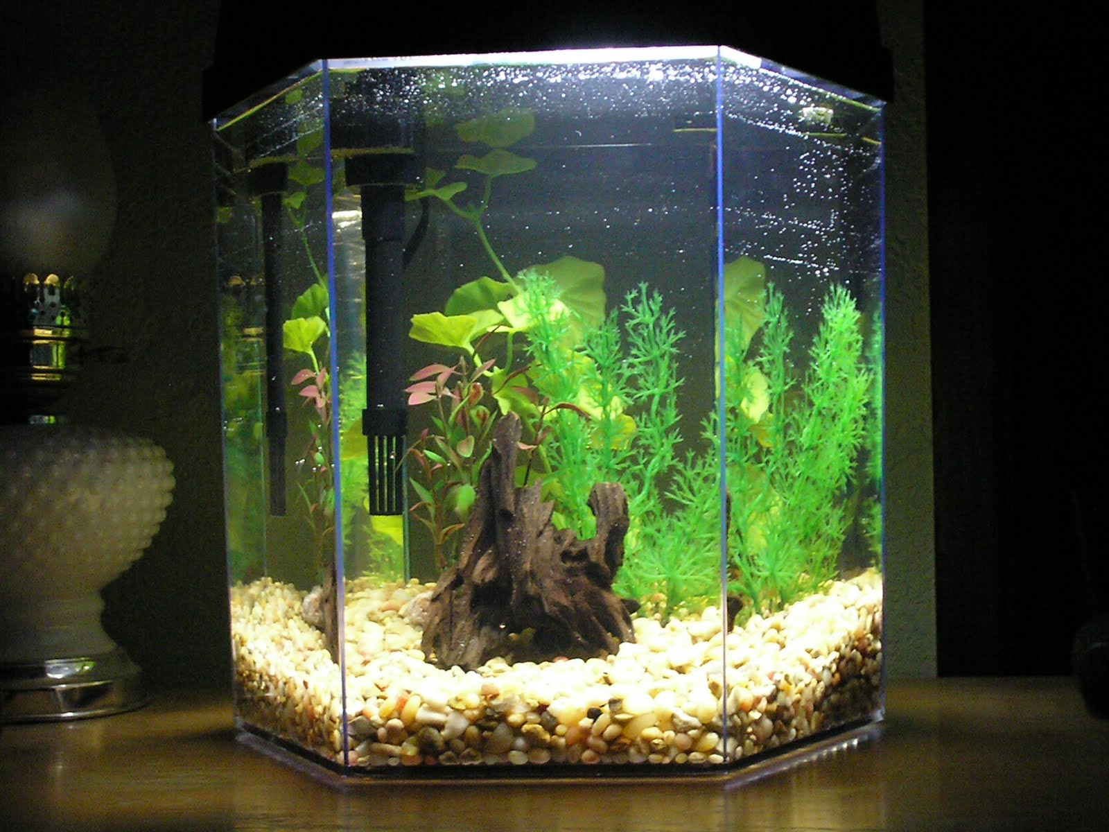 Marineland hexagon aquarium marine world for 20 gallon hexagon fish tank