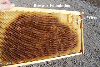 When Starting Out Keeping Bees The Beekeeper Must Decide What Type Of Foundation Is Best To Use In Past There Was Only One Kind Plain Beeswax Formed