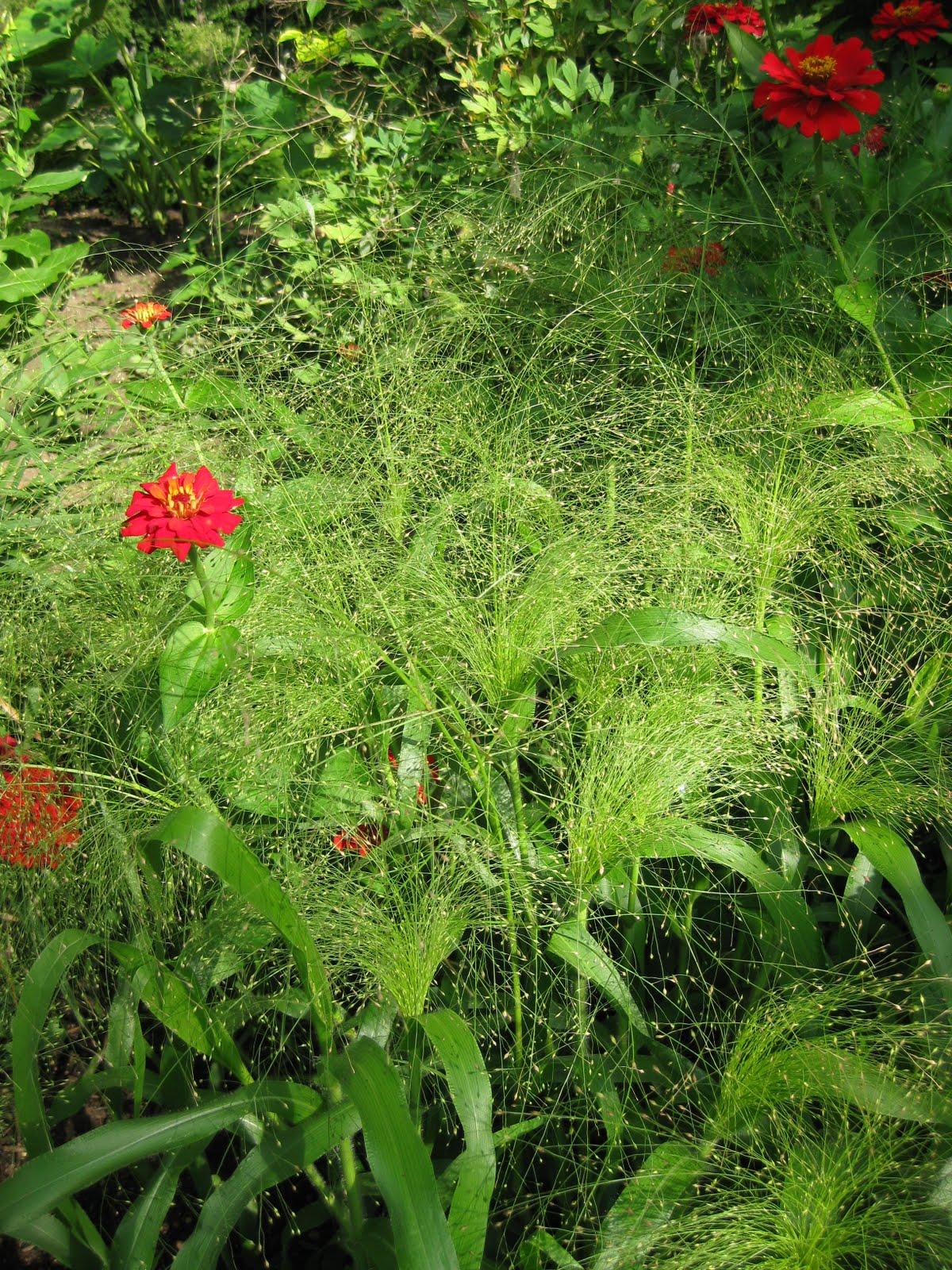 Rotary Botanical Gardens - Hort Blog: Back To The Furnace