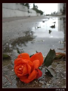 o pata de culoare cand totul in viata noastra e gri....da o sansa vietii....treieste-o...