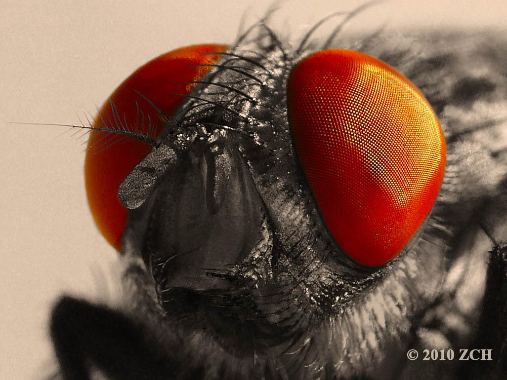 Zane's Photo Blog: November 2010 Fly Eyes