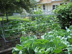 Garden - 2010