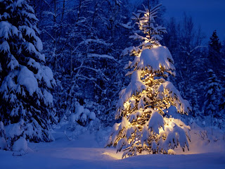Cristmas Tree Lighting || Top Wallpapers Download .blogspot.com