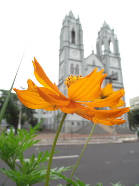 flower in front of St. Peter's Church in Porto Alegre