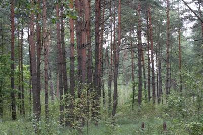 The Ponari Forest