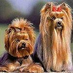 Venta de perros cachorros