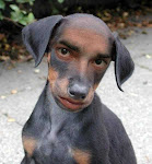 Anjing yang saya mau kasi sewa