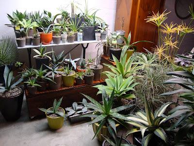 danger garden my basement greenhouse
