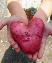 The Heart Spud