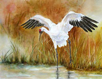 """Wetland Grace""  Whooping Cranes"