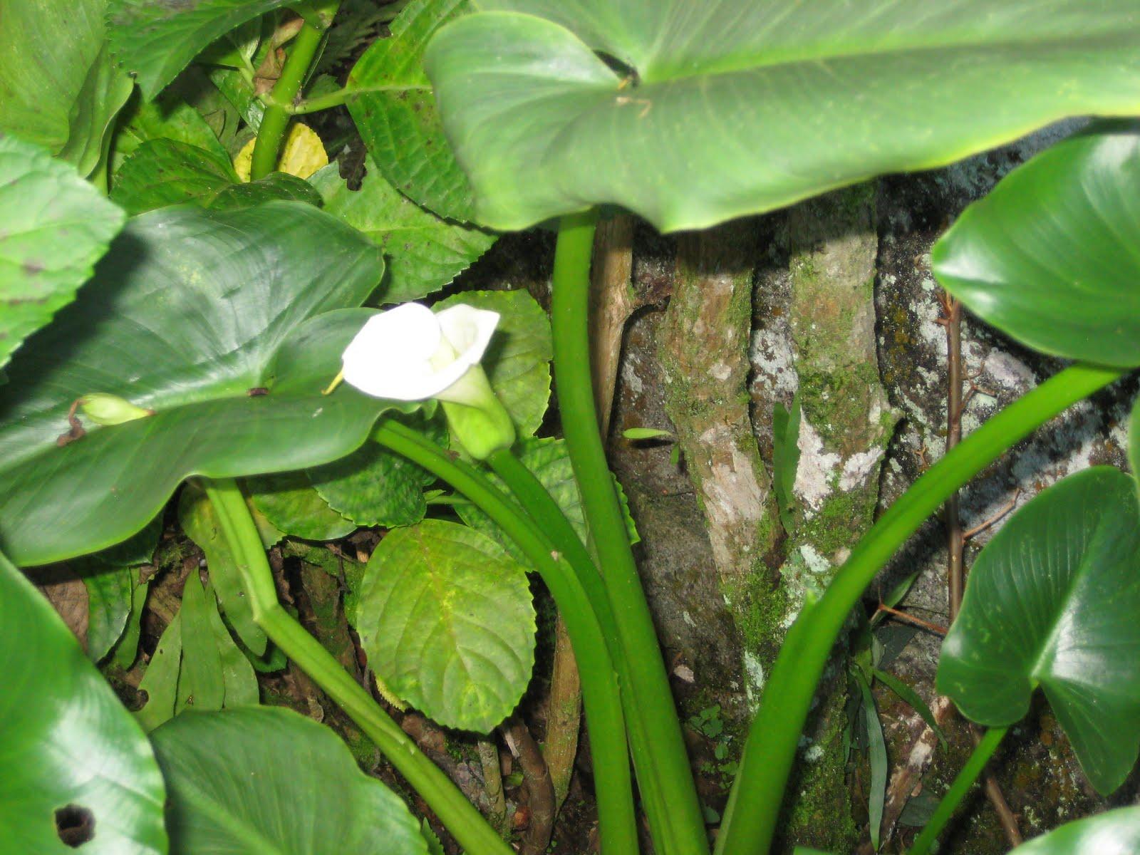 Proyecto de plantas ornamentales cartucho for Modelo de proyecto de plantas ornamentales