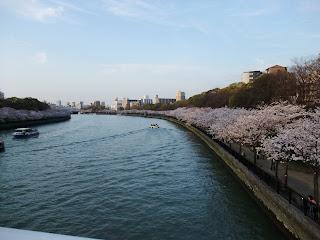 大川沿いの桜並木