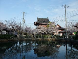四天王寺さんの桜