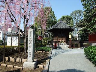 淺草寺 六角堂の枝垂桜