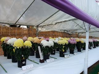 大阪城の菊花展の受賞作品