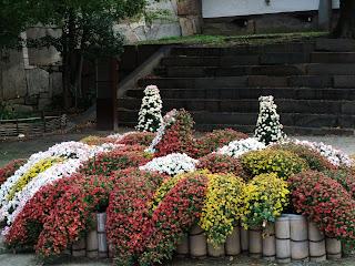 大阪城の菊花壇