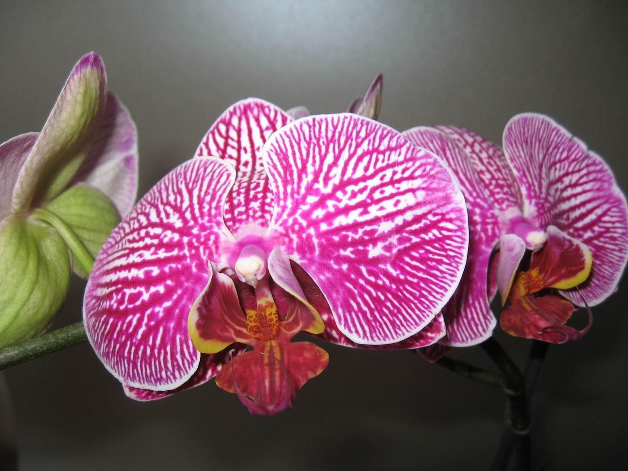 Открытки красивые открытки с цветами