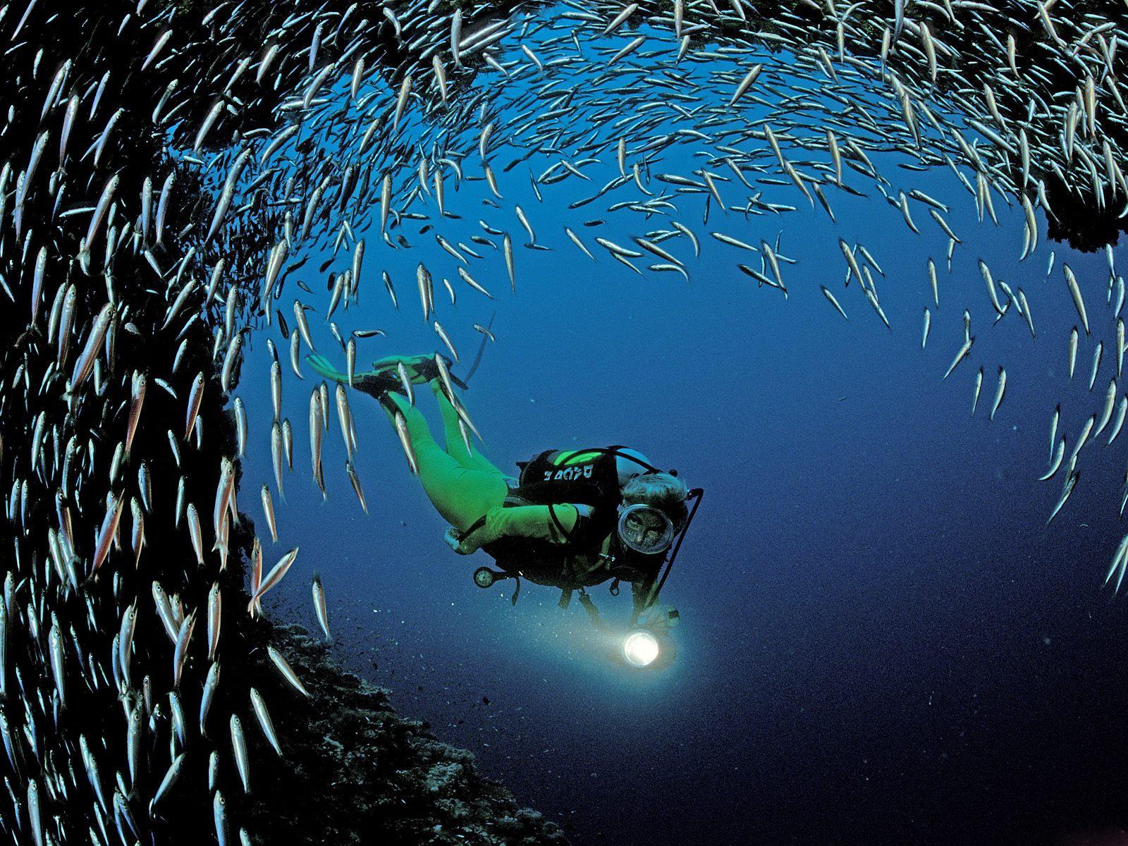 http://3.bp.blogspot.com/_rAsiSS06Zgg/TPfFfbIrp_I/AAAAAAAABOE/8PusVTdIqCY/s1600/Underwater+Wallpaper+%25285%2529.jpg