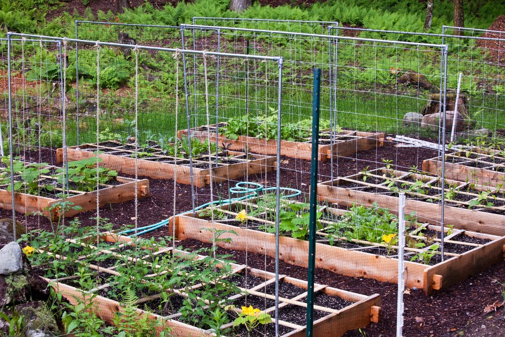 ewa in the garden 15 ideas of diy pea trellis