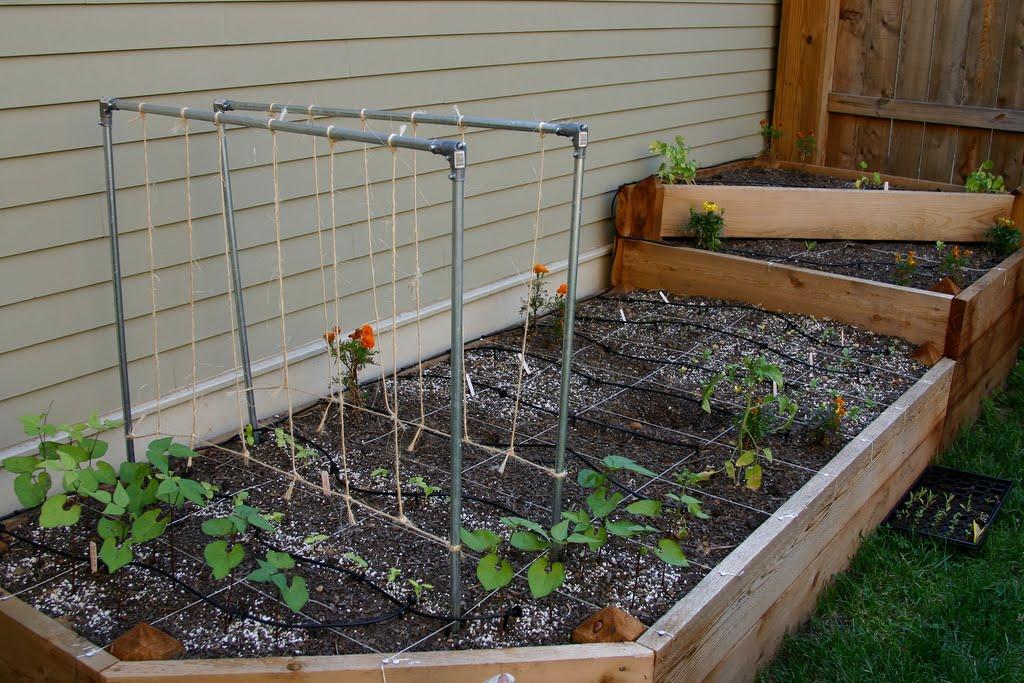 Ewa in the Garden 15 ideas of DIY pea trellis