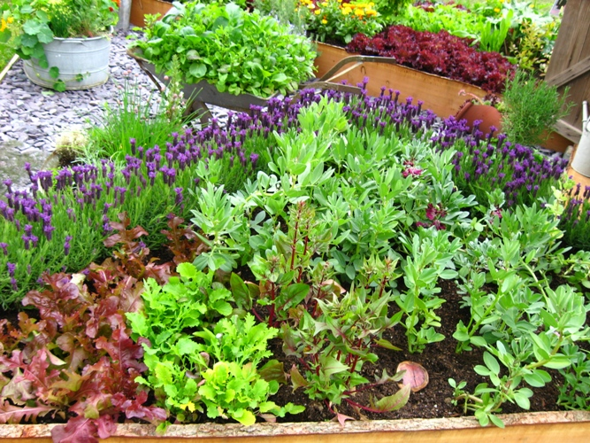 lavender as border plant seems to be perfect i am going to adapt this idea in my garden i will rather choose l angustifolia as it is more hardy and will - Flower And Vegetable Garden Ideas