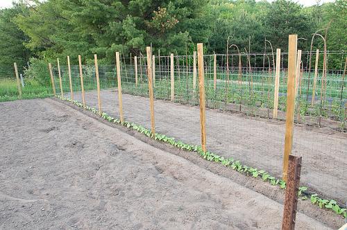 Ewa in the Garden 14 ideas for bean poles Inspirational Monday