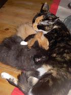 Nana ja Vauvat