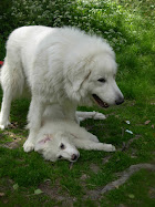 Luna ja neela