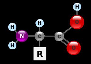 estructura básica de un aminoacido