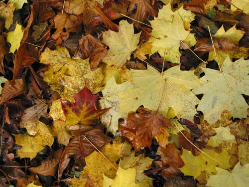 Citaten Herfst Yasuo : Foto meer herfstfoto s