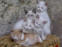 (Alcuni dei) miei gatti